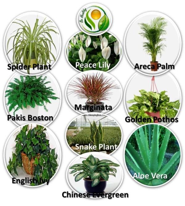 10-tanaman-hias-penangkal-racun.jpg