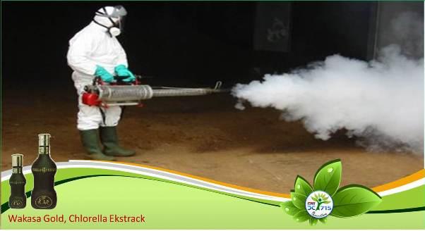 Membasmi Nyamuk dengan Fogging Sebaiknya Dihindari