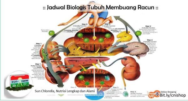 Jadwal Membuang Racun Tubuh